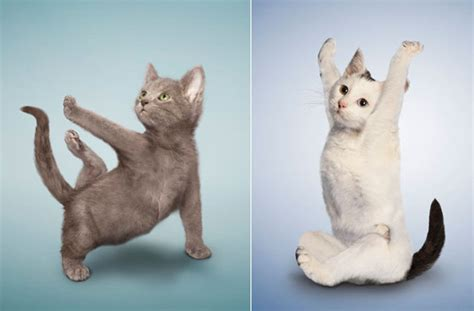 Cute and Funny: Yoga Dogs and Cats, Let's Stretch