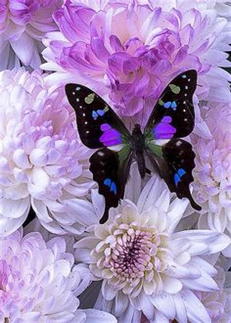 1000+ images about Pretty butterfly on Pinterest