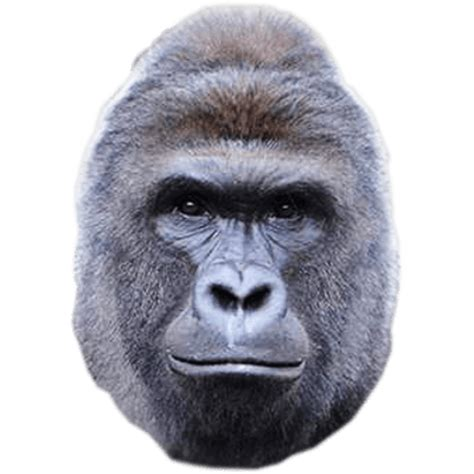 Harambe gorillas face png #42682 - Free Icons and PNG
