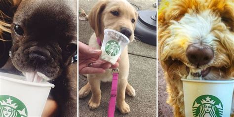 Puppuccinos - Starbucks For Dogs