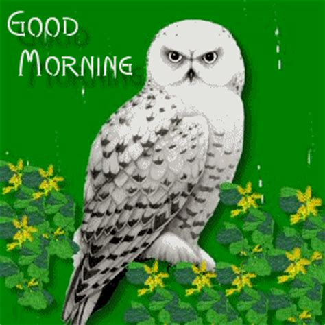 Good Morning With Owl
