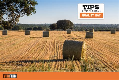Tips for Making Quality Hay - VitaFerm