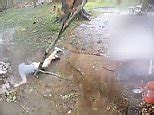 Snake filmed eating another snake in India | Daily Mail Online