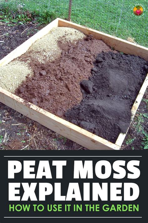 Peat Moss: Our Guide on Using Sphagnum Peat In Your Garden