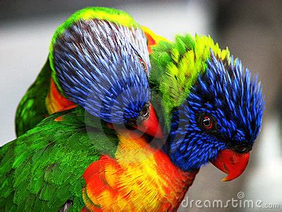 Two Bright Colored Birds Royalty Free Stock Image - Image